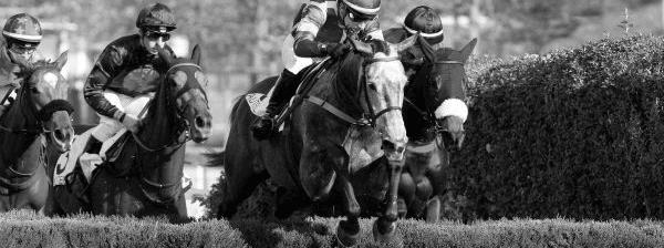 Photo de DIAMONT DROP cheval de HAIES