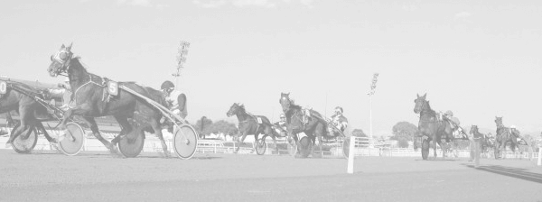 Photo de DORIAN DE BEAUM cheval de TROT MONTE