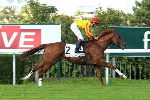 Photo de COLOR CODE cheval de PLAT