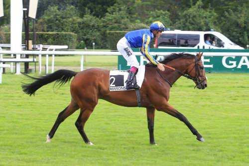 Photo de HIGH JINX cheval de PLAT