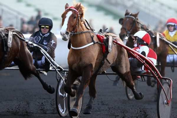 La photo de Blues D'Ourville Quinté+ PRIX OSCAR COLLARD à Vincennes