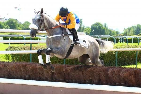 Photo de PUNCH NANTAIS cheval de HAIES