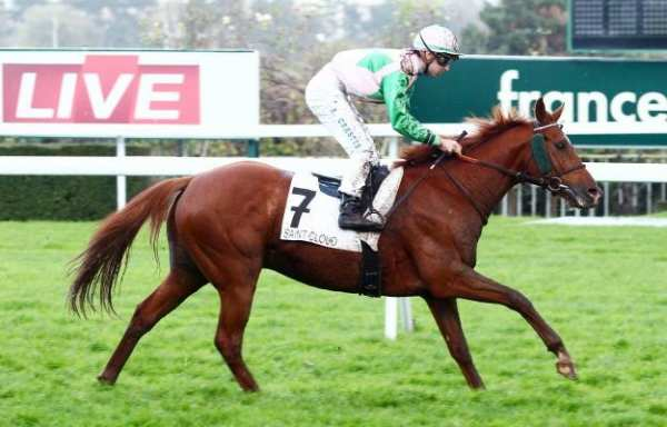 La photo de LION DES FLANDRES