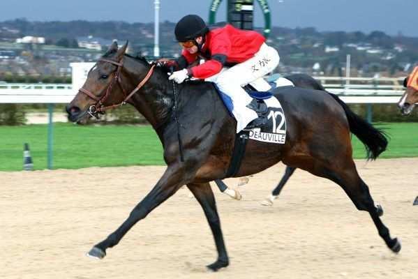 Photo de OHNE TADEL cheval de PLAT