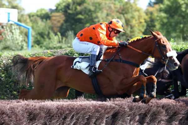 Photo de LE MANS cheval de STEEPLE CHASE