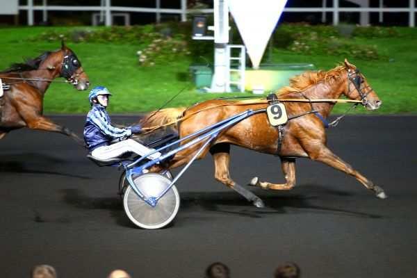 Photo de CHAMPION DORE cheval de TROT ATTELE