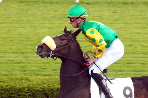Photo de ORMIXA cheval de PLAT
