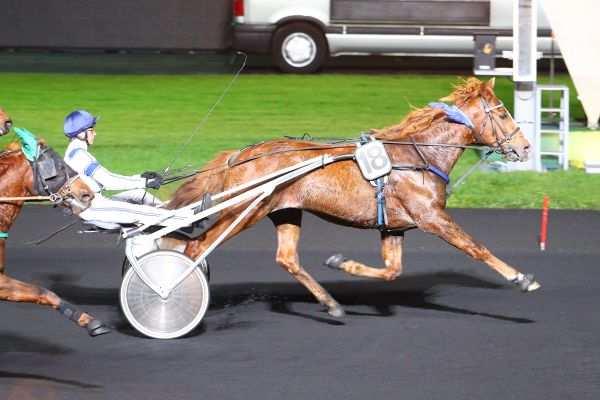 Photo de DIAMANT NONANTAIS cheval de TROT ATTELE
