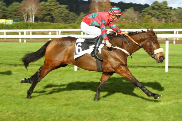 Photo de MARESIAS cheval de STEEPLE CHASE