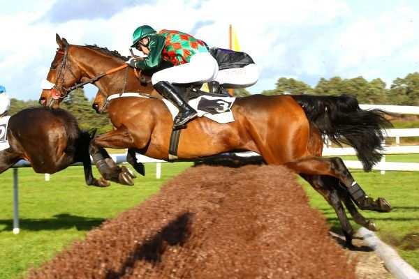 Photo de FERRUCCIO cheval de HAIES