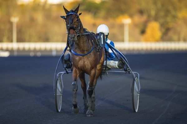 Photo de CAPRAIO cheval de TROT ATTELE