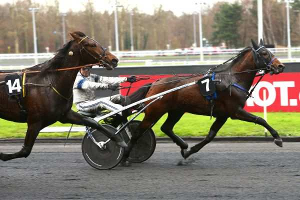 Photo de ESPOIR D'HAUFOR cheval de TROT ATTELE