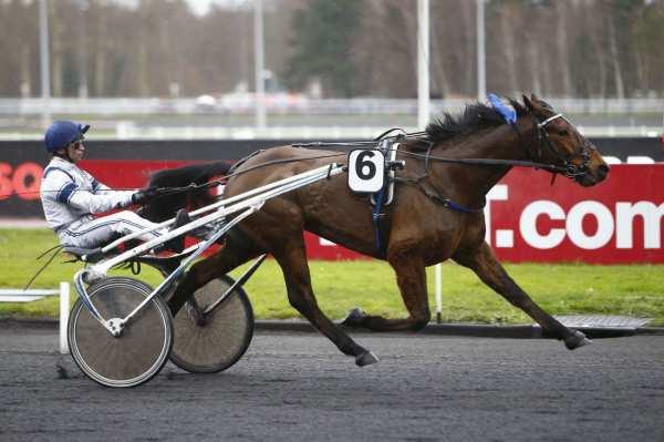 Photo de CACTUS D'YVEL cheval de TROT ATTELE