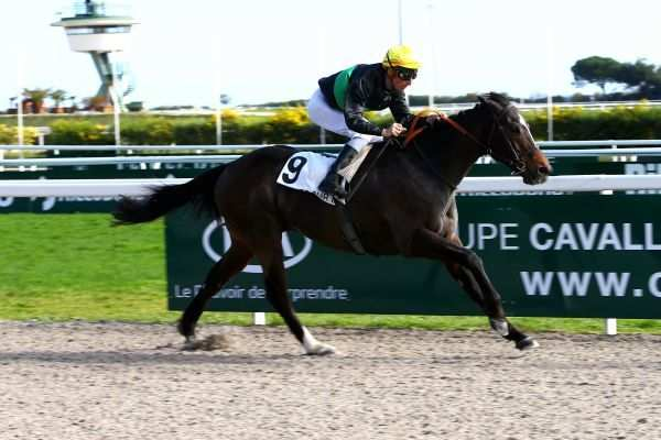 Photo de NEW OUTLOOK cheval de PLAT