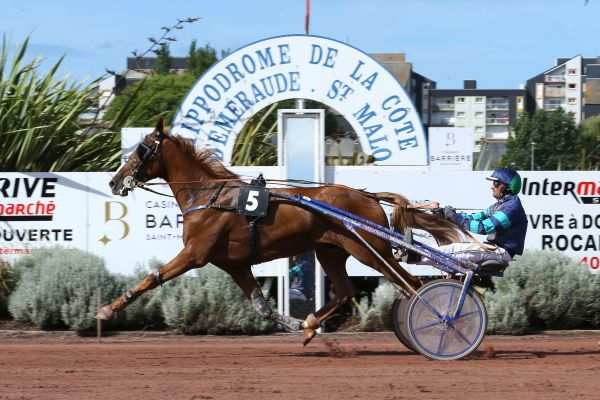 Photo de BOL D'OR OF LOVE cheval de TROT ATTELE