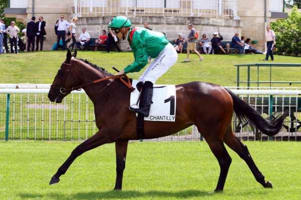 Photo de ELDENA cheval de PLAT