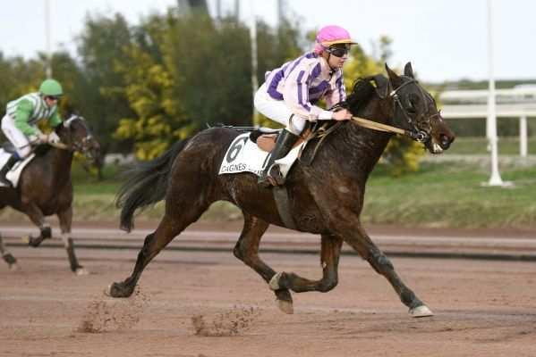 Photo de CHARMEUR DE BREVOL cheval de TROT MONTE