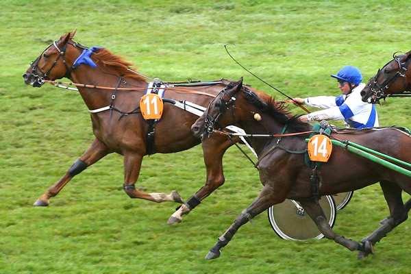 Photo de CAID BARBES cheval de TROT ATTELE