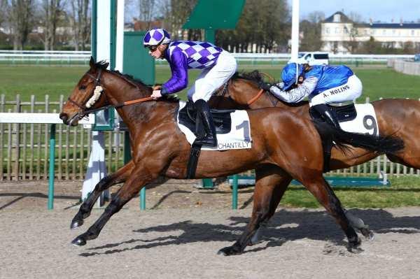 Photo de SHOWTIME STAR cheval de PLAT