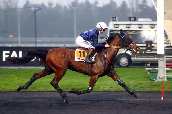 Photo de FLASH DU GOUTIER cheval de TROT MONTE