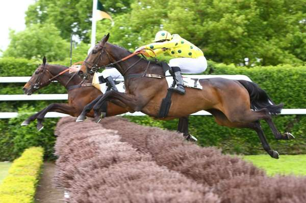 Photo de FARLOW DES MOTTES cheval de STEEPLE CHASE