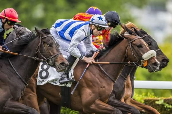 Photo de AKINATHOR GAME cheval de PLAT