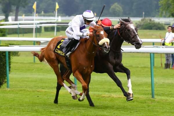 Photo de NEW IALY BARELIERE cheval de PLAT