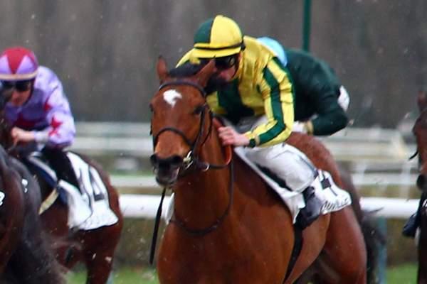 Photo de IL DECOIFFE cheval de PLAT