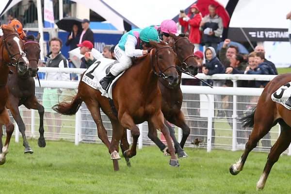 Photo de HOLD TRUE cheval de PLAT