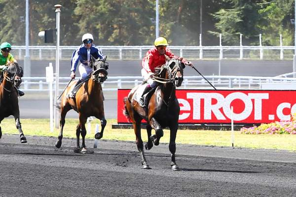Photo de EXQUISE DANCER cheval de TROT MONTE