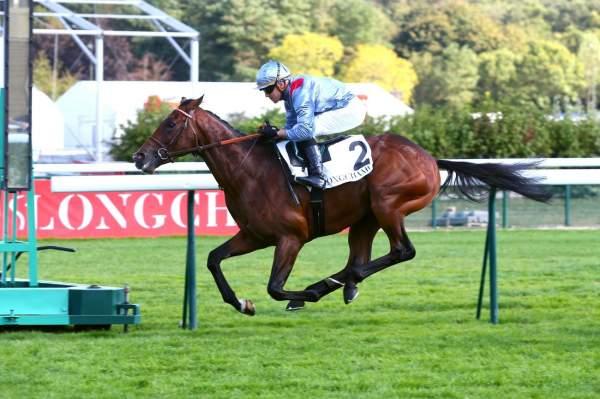 Photo de INDE cheval de PLAT