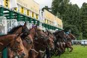 Photo Ascot Stalles Départ Course Galop