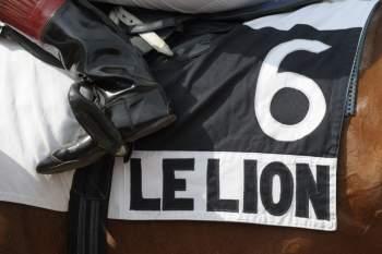 Photo Le Lion Angers Tapis Selle