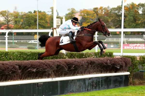 Photo de THE STOMP cheval de STEEPLE CHASE