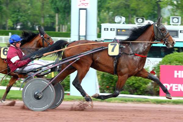 Photo de CLEVER LYMM cheval de TROT ATTELE