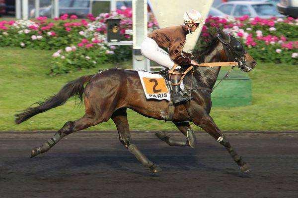 Photo de BYRH GEDE cheval de TROT MONTE