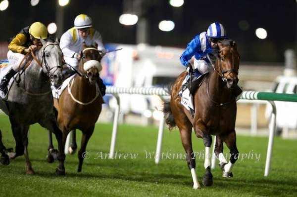 Photo de ERTIJAAL cheval de PLAT