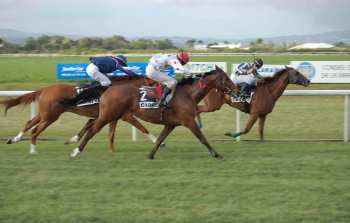 Photo Carrere Photo Courses galop piste herbe