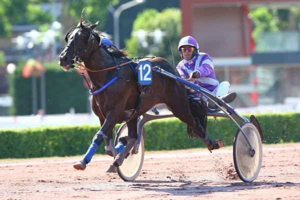 Photo de BUNKER DU PRIEURE cheval de TROT ATTELE