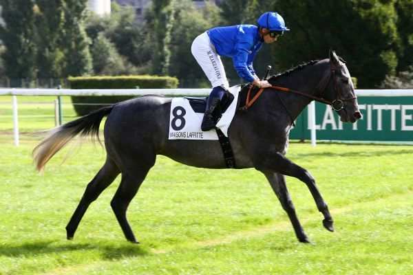 Photo de GRAPHITE cheval de PLAT