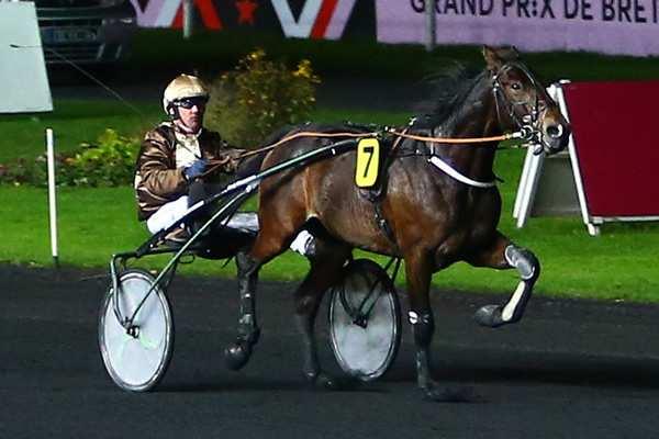 Photo de DIPLOMATE D'AM cheval de TROT ATTELE