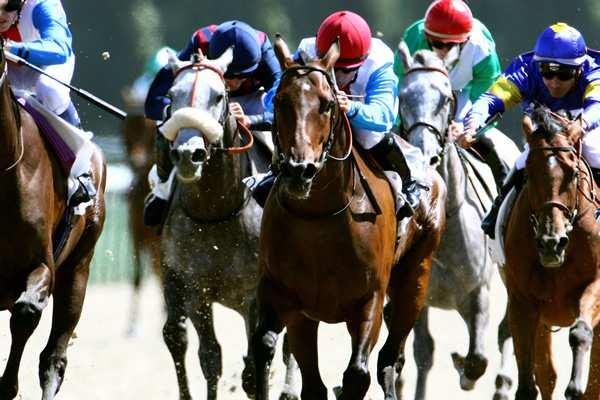 Photo de DAME DES LYS cheval de PLAT