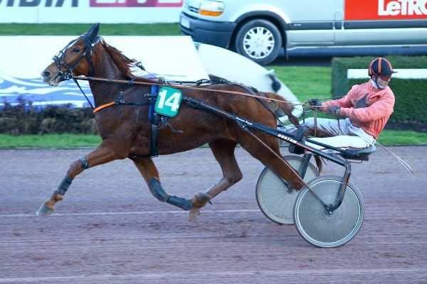 Photo de DIANE DU PALAIS cheval de TROT ATTELE