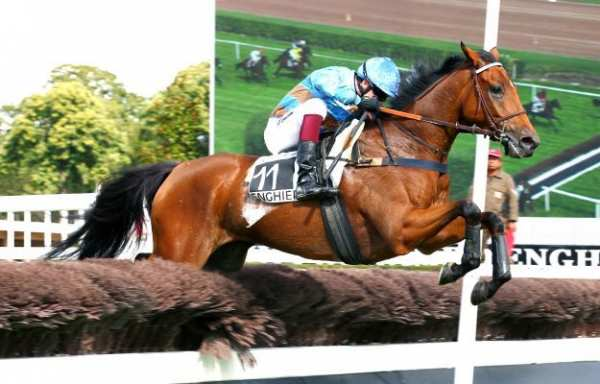Photo de TELENOMIE cheval de STEEPLE CHASE
