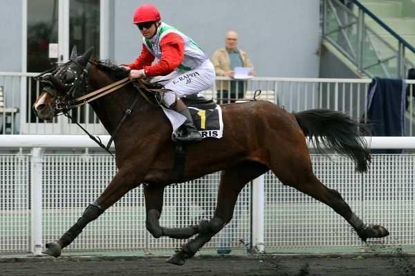 Photo de BERLIOZ DE GINAI cheval de TROT MONTE