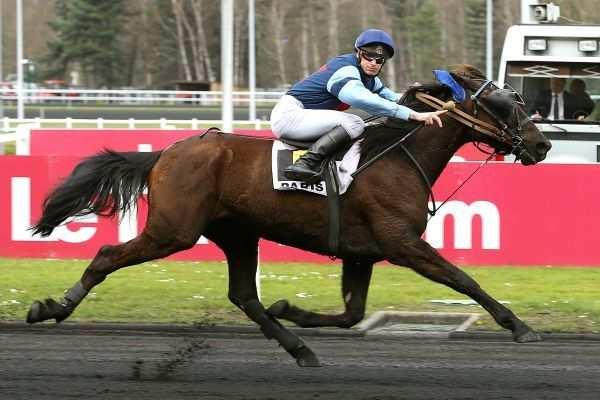 Photo de BUSTER DE BEAUFOUR cheval de TROT MONTE
