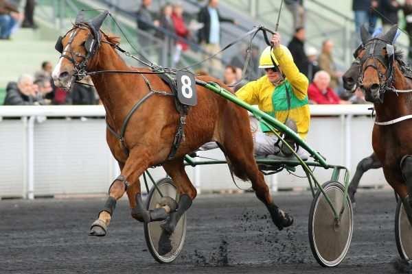 Photo de BALZAC DE L'ITON cheval de TROT MONTE