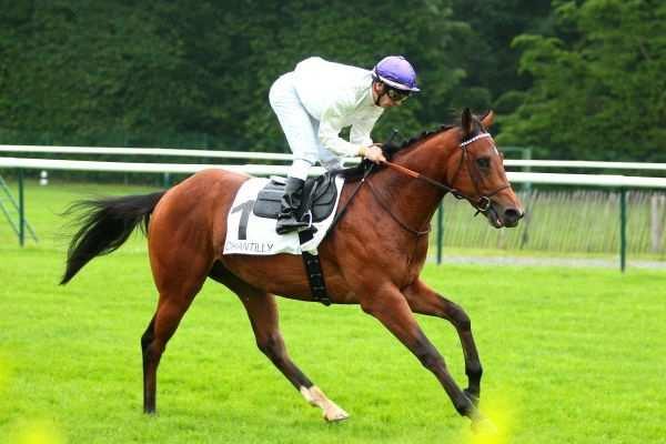Photo de RONCEY cheval de PLAT