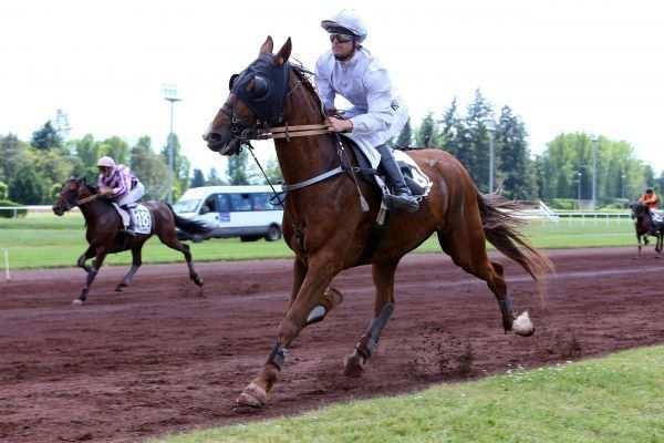 Photo de COCKTAIL DYNAMITE cheval de TROT MONTE