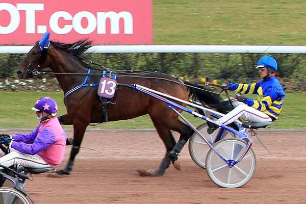 Photo de DREAM MASTER cheval de TROT ATTELE